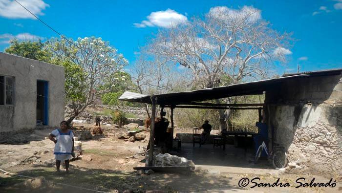 Cenote Yaaluzdzil, road to Mucuyché 1